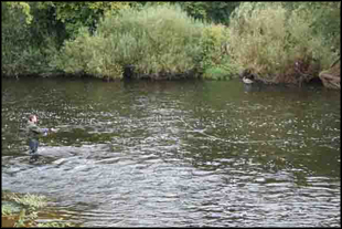 Fly fishing for salmon on the Nore